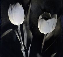 wet plate tulips by Deborah Parkin