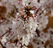 Blossom Buddies by CazSteffens