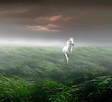 Grassland by Igor Zenin