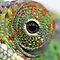Eyes of animals in AFRICA/ Oë van diere in AFRIKA