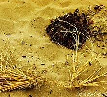 Beach Brush by BCMphotos