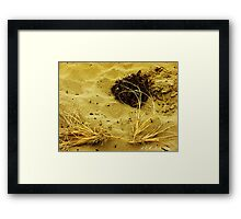 Beach Brush Framed Print