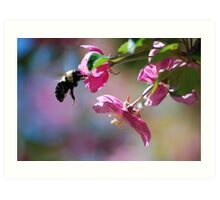 Bumble Bee on a Blossom Art Print