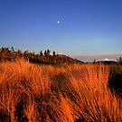 Alpine Grass by Justin Seymour