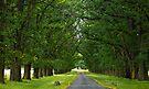 Elm Avenue, Gostwyk by Odille Esmonde-Morgan