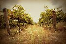 Two Vines by yolanda