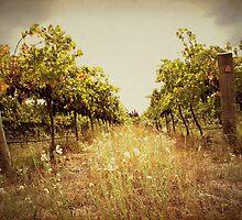 Two Vines by yolanda