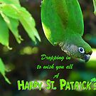 Dropping In To Wish You All A Happy St. Patrick's Day - Conure NZ by AndreaEL