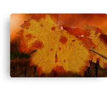 Autumn Leaf in the Vineyard Canvas Print