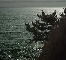 Modest Perch by my Friend the Sea by Greg Owens