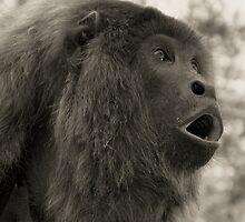 Howler Monkey - Bolivia by Craig Baron