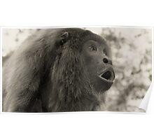 Howler Monkey - Bolivia Poster