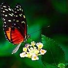 Red Butterfly by William Newland