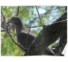 Hello, Dove! Poster