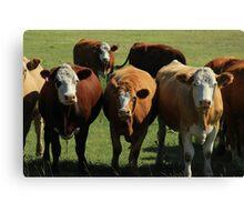 Herd of Cows on the Prairies Canvas Print