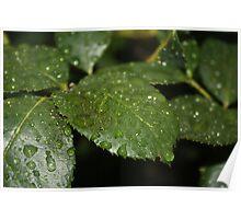 Leaf Macro Poster