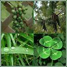 greens... by dabadac