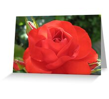 When Irish Eyes are Smiling Rose - A dedication! Greeting Card