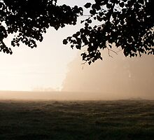 Misty Morning by therkd