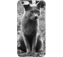 A Grey Stray: Posing for the camera iPhone Case/Skin