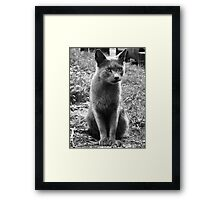 A Grey Stray: Posing for the camera Framed Print