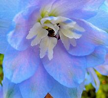 Delphinium - Blue Rainbow by ArundelArt