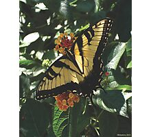 Butterfly I Photographic Print