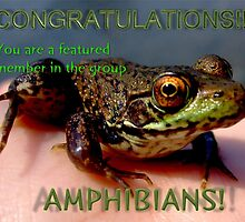 Amphibians featured member banner by Vanessa Serroul