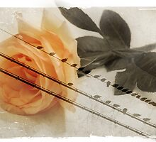 Peace by Rozalia Toth