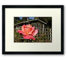 I Never Promised You A Rose Garden... Framed Print