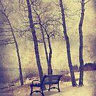 Forest around by Angela King-Jones