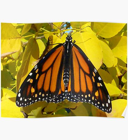 Monarch Butterfly - The Monarchy Poster