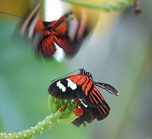 Third-base Butterflies by Virag Anna Margittai