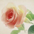 Single Rose by aMOONy