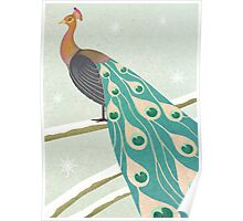 winter christmas peacock Poster