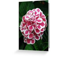 Soft Red and White Hydrangeas Greeting Card