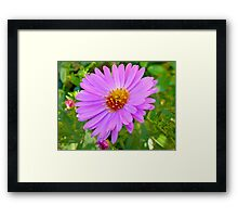 Daisy - Fantasia Framed Print