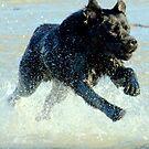 1000 cc Dog Power by Alan Mattison