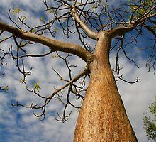 Boab Tree by Mike Merrutia