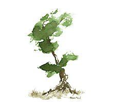 Little Zen Tree 184 Photographic Print