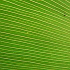 Lines Drawn in Green by tenzil