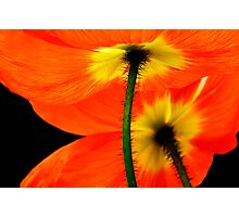 Poppies - For My Pop Photographic Print