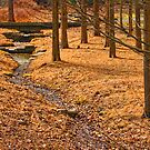 Longwood Pine woods by Marilyn Cornwell