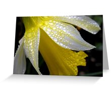 Delicate Daffodil Greeting Card