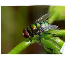 Awwh Purdy Blow Fly??? Poster