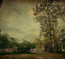 The Gate by Jonicool