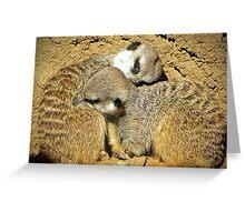 Meerkats Greeting Card