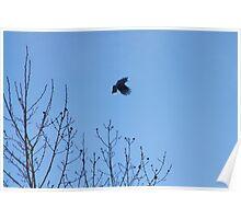 soaring Poster