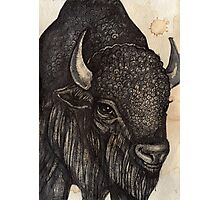 The Black Buffalo Photographic Print