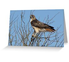 Red-Tailed Hawk ~ Grasping for branches........ Greeting Card